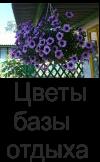 Цветы на базе отдыха